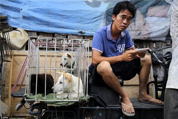Theo điều tra của tổ chức, đại đa số những loài động vật được bày bán trong lễ hội là bị đánh cắp – việc này dễ dàng và có chi phí rẻ hơn rất nhiều so với nuôi tại các doanh trại nông nghiệp.(Ảnh: EPA)