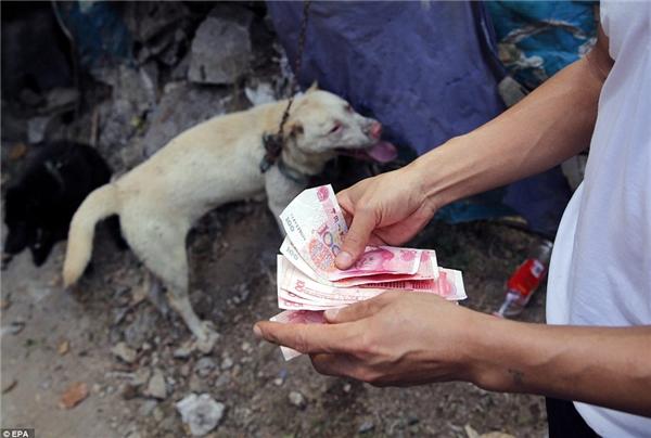 Một khi bị bán đi, những chú chó còn sống cũng sẽ bị đập đầu hoặc móc thanh sắt vào cổ họng ném vào nước sôi, làm sạch lông, chiên xào, nấu nướng thành mồi nhậu.(Ảnh: EPA)