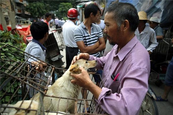 Được biết, lễ hội thịt chó Ngọc Lâmchính thức mở màn ngày 21/6/2016.(Ảnh: EPA)