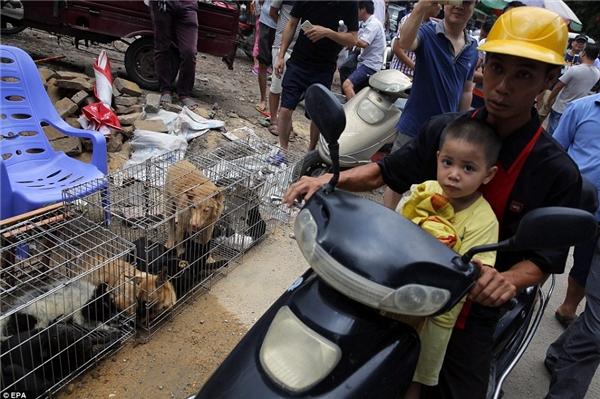 """Bà Irene Feng – Giám đốc Tổ chức chó mèo châu Átừng tuyên bố rằng, ngoài sự tàn ác, hành động buôn bán chó mèo bị đánh cắp làm thành thức ăn cũng gia tăng nguy cơ ngộ độc thực phẩm cho người tiêu thụ, bởi bọn trộm cắp thường """"đầu độc chúng rồi mới bắt đi, như vậy là không an toàn"""".(Ảnh: EPA)"""
