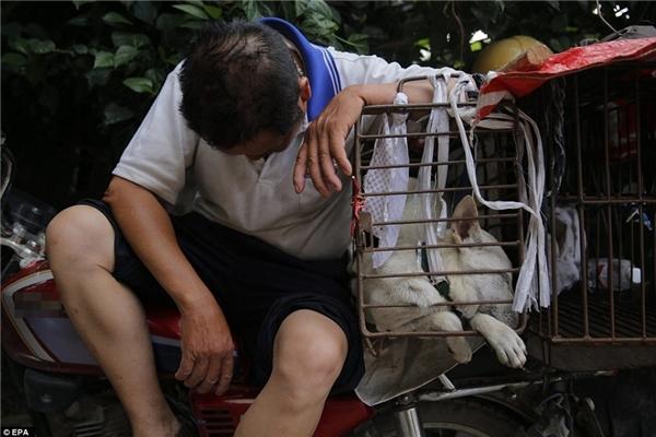 Trong đó, một số con thì bị đánh chết rồi đem đến cân kí bán thịt, một số vẫn còn sống nhưng lại bị thương nặng, nhồi nhét trong những chiếclồng gỉ sét chật hẹp. (Ảnh: EPA)