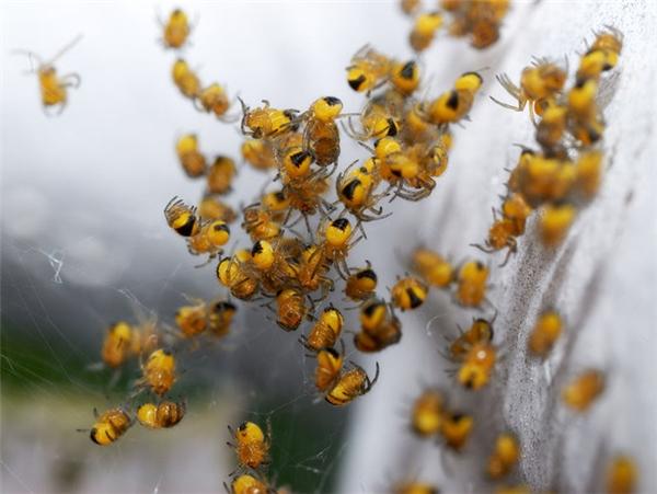 Nổi da gà với vùng đất bị tơ nhện phủ trắng xoá như một cơn mưa