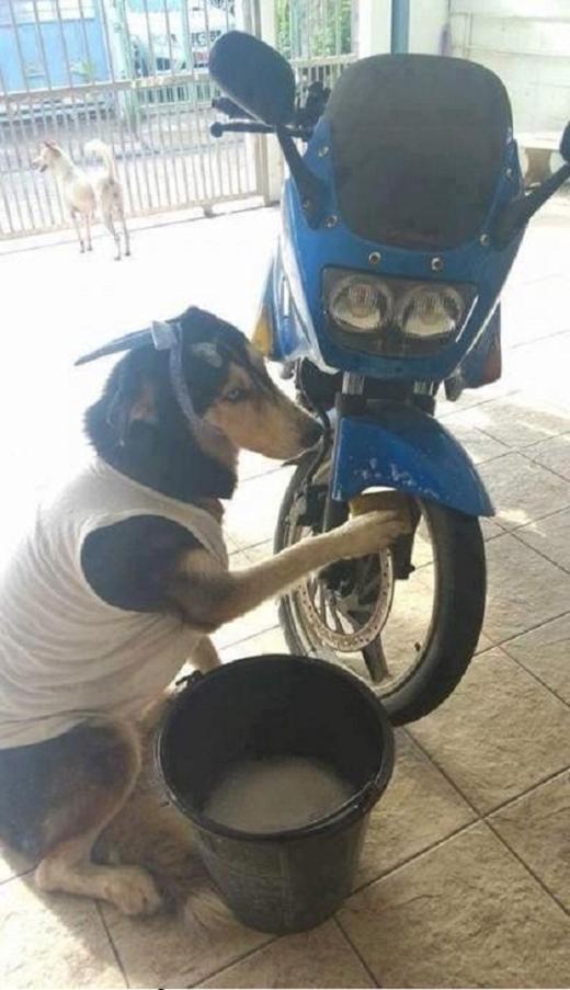 Xe chủ sắm cho to, cho sang, cho bằng chị bằng em rồi về nhà bắt chó mình rửa thế đấy. Chó mình có được cưỡi phút nào đâu.