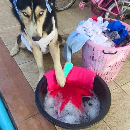 Đến cả quần áo cũng chẳng chịu tự giặt, toàn bắt chó mình vất vả chà, chà nữa, chà mãi thôi.