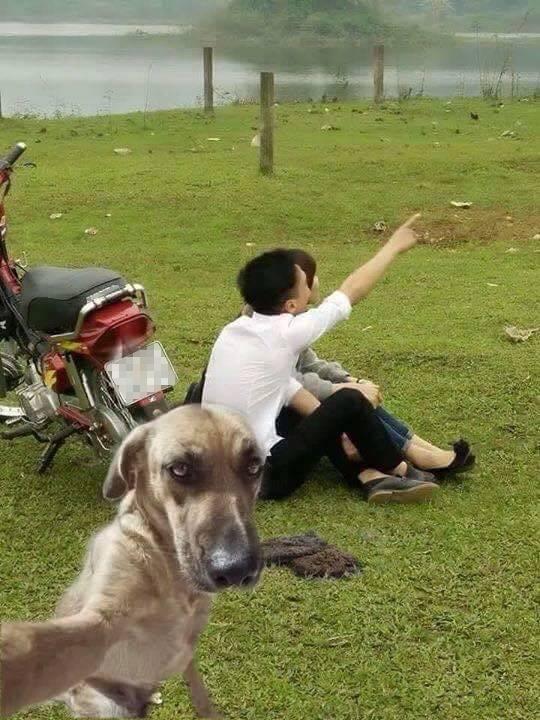 """Quên bãi mìn đi, chó chụp hình """"tự sướng"""" mới là yếu tố thu hút người xem nhé."""