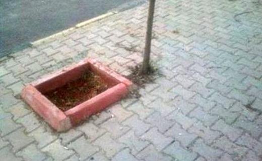 Hình như trồng cây hơi sai lỗ. (Ảnh: Internet)