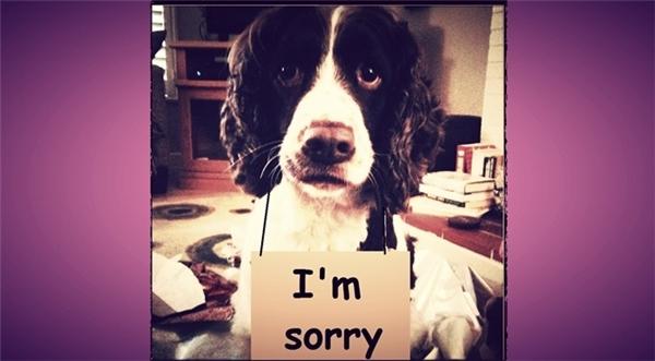 Nếu một trong hai bạn (hoặc cả hai) có thú cưng, hãy nhờ chú cún hoặc cô mèo đáng yêu của mình làm xứ giả đưa tin, gửi lời xin lỗi với người ấy. (Ảnh minh họa)