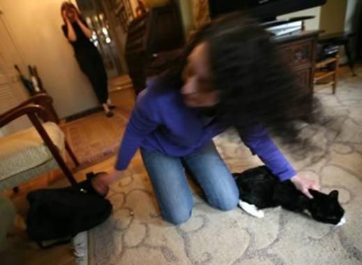 Chi phí của dịch vụ bắt mèo thuê là 80 đôla, hơn 1,6 triệu VND. (Ảnh: Internet)