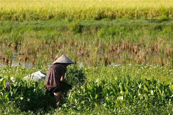 Rưng rưng câu chuyện buồn của cụ bà 80 tuổi cắt cỏ tại Quảng Nam