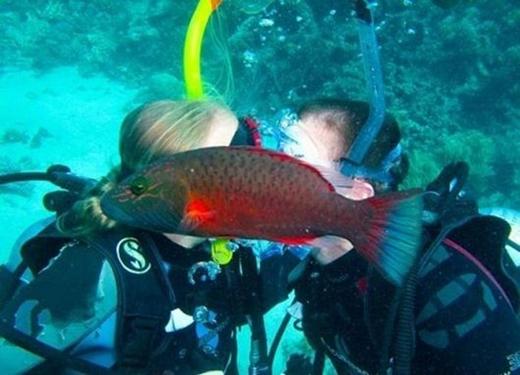 Con cá làm rầu nụ hôn. (Ảnh: Internet)
