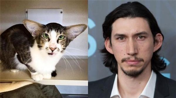 Hai anh em sinh đôi cùng cha khác loài.
