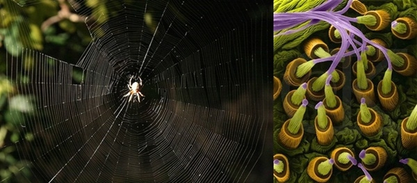 12. Còn đây là hình ảnh tơ nhện khi được phóng đại.