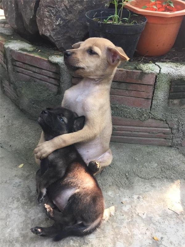 Thương đứt ruột cậu cún em ở chùa Bảo Hoa Sơn đã qua đời