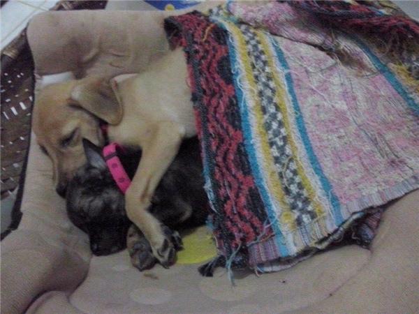 """Hai anh em cún dễ thương từng khiến dân mạng """"bấn loạn"""" vì lúc nào cũng ôm nhau không rời. (Ảnh: Chùa Bảo Hoa Sơn)"""