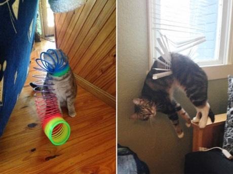 Mèo ta thông minh nhất trên đời. Ha... ha... ha...(Ảnh: 9GAG)