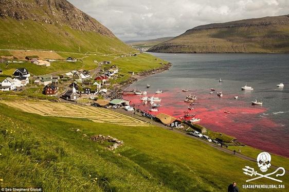 Cả một vùng biển chuyển sang màu đỏ rực của máu tươi.