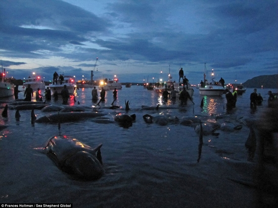 Đến tối, xác của bầy cá vẫn chưa được thu dọn hết.
