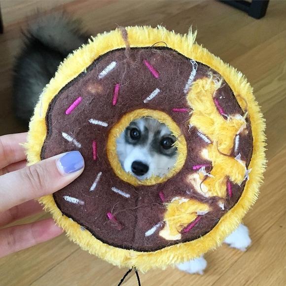 …như cái bánh donut đồ chơi này nè.