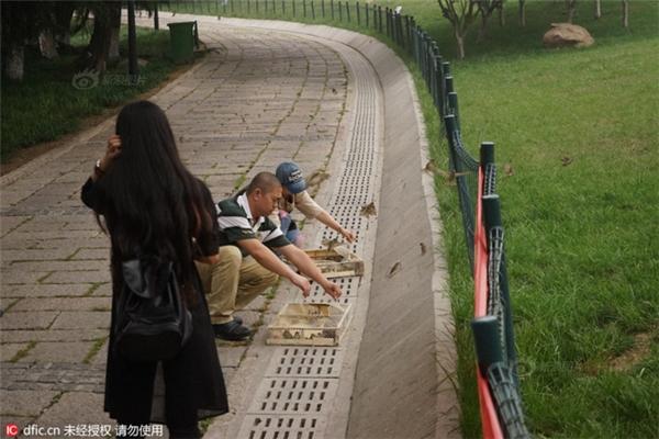 Rất nhiều người đến công viên để phóng sinh chim.
