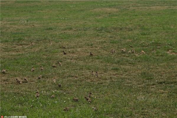 Nhiều chú chim không thể bay mà chỉ có thểđi bộ trên mặt đất.