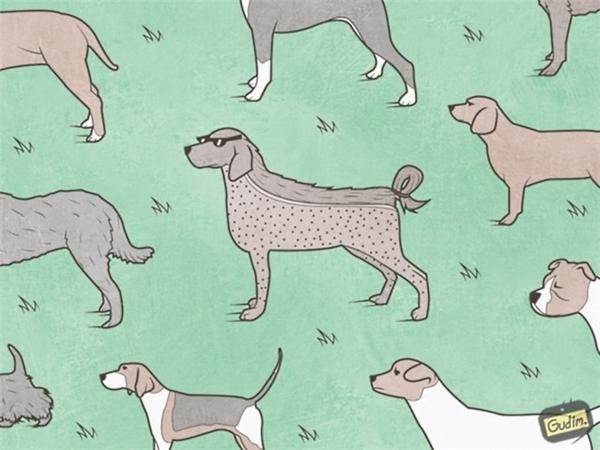 """1. Cuộc sống hiện đại, đến chó cũng được tỉa lông, chải chuốt như """"dân chơi"""". Có lẽ chú chó săn này lấy cảm hứng từ kiểu đầu """"under cut"""" sành điệu chăng?"""