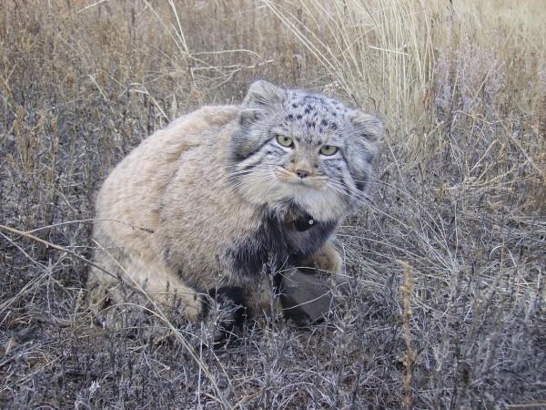 Lần này, chúng đã thích nghi được với cuộc sống hoang dã. Chúng cũng luyện được các kỹ năng tìm kiếm thức ăn và tiếp tục đạt kích thước tối đa.