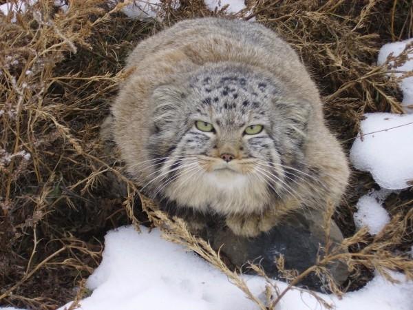 Về phía người nông dân, ông đã rất buồn khi phải chia tay với bầy mèo của mình nên thường xuyên quay trở lại chỗ kho thóc ngày xưa với hy vọng một ngày nào đó lũ mèo sẽ quay trở về với mình.