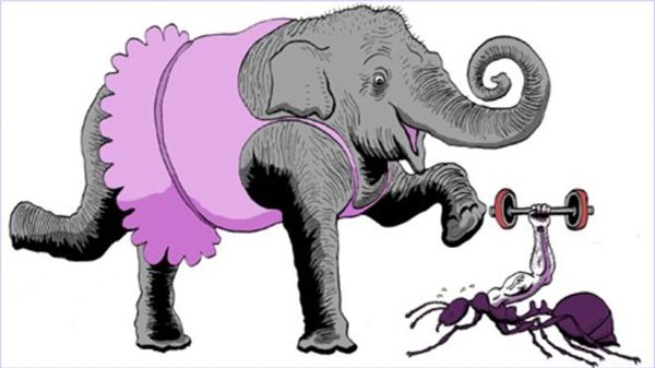 7. Con kiến với con voi kết hôn với nhau. Hỏi chúng kết hợp lại sẽ sinh ra con gì?(Ảnh Internet)