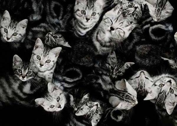 10. Một đàn mèo hoang bị điếc đang dí nhau. Hỏi chúng có tất cả mấy con?(Ảnh Internet)