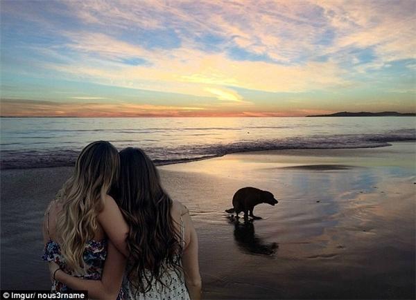Bức ảnh này có cảnh biển rất lãng mạn nhưng trừ chú cho đang phóng uế trên bãi cát.