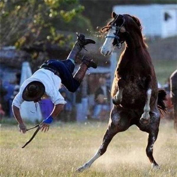 """Con ngựa: """"Xuống đi! Chia tay!"""""""
