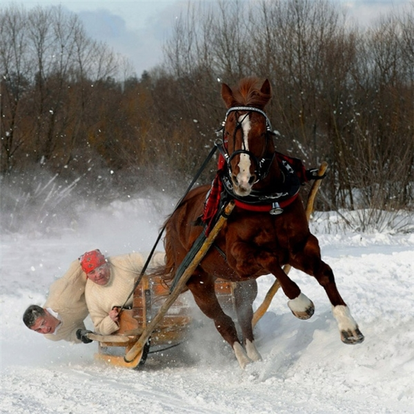 Ngựa à, cưng không phải là tuần lộc của ông già Noel đâu mà cua quên ngày mai thế nhé.