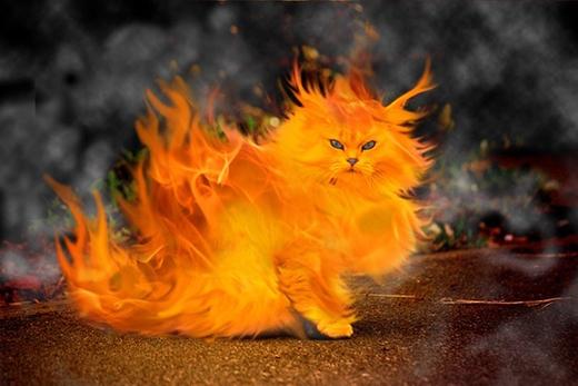 Người Pháp vào thế kỉ 17 rất thích thiêu sống mèo. (Ảnh: Internet)