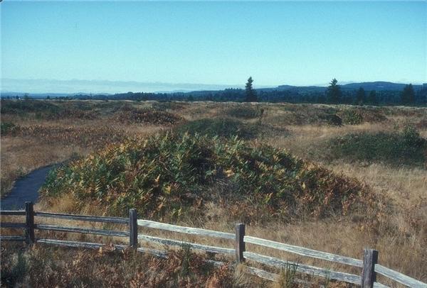 Những nấm mồ to lớn có kích thước khoảng 2 mét.