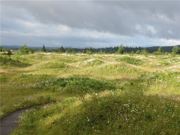 Bí ẩn vùng đất tự dưng mọc lên hàng nghìn nấm mồ