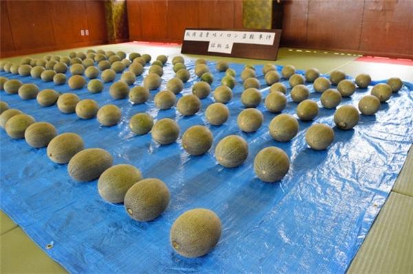 Người Việt trộm dưa lưới của người Nhật với lí do không ngờ