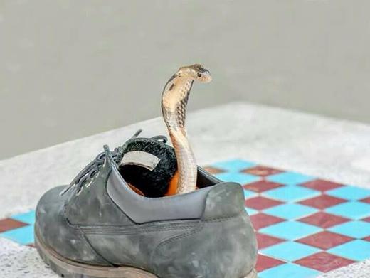 Xác định là vứt bỏ luôn đôi giày. (Ảnh: Internet)