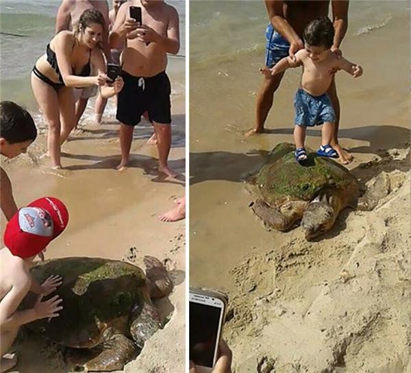Họ cũng cho một cậu bé leo lên mai rùa mặc dù rõ ràng là bé không hề thích một chút nào và còn kêu khóc liên tục,tuy nhiên có lẽ vì sợ con rùa hoặc sợ té nhiều hơn.