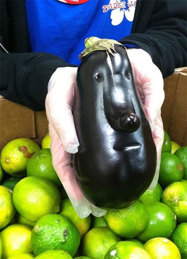 Cái mặt dài dài, xấu xấu, mập mập này chính là trái cà tím đấy các bạn ạ. (Ảnh: Internet)