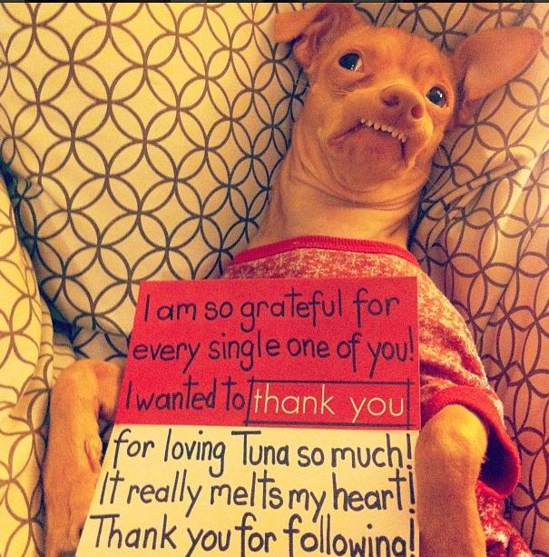 Mặc dù xấu xí nhưng Tuna luôn chứng tỏ mình không hề buồn bã hay bất hạnh, trái lại còn tận hưởng cuộc sống một cách tích cực.(Ảnh: BuzzFeed)