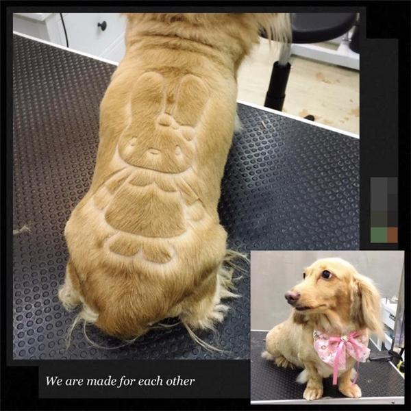 """Những hình ảnh dễ thương được """"xăm"""" lên lông các em thú cưng.(Ảnh: Shanghaiist)"""