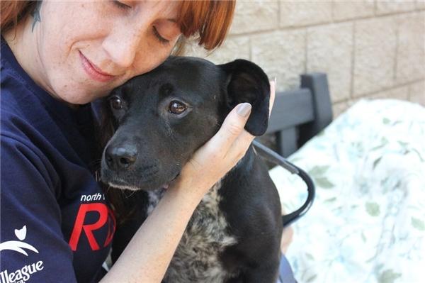 Bí mật xót xa bên trong cơ thể của chú chó được cứu hộ