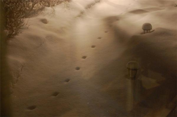 Những dấu chân in trên nền tuyết trắng. (Ảnh Internet)