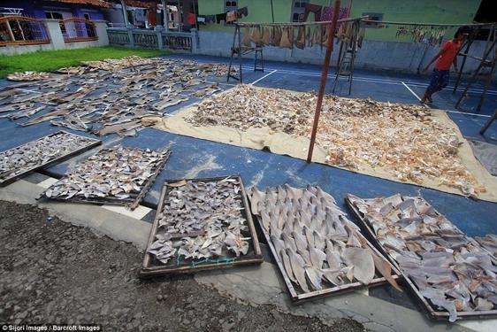 Hơn 71% trong số đó được xếp vào nhóm có nguy cơ tuyệt chủng từ cao đến rất cao.