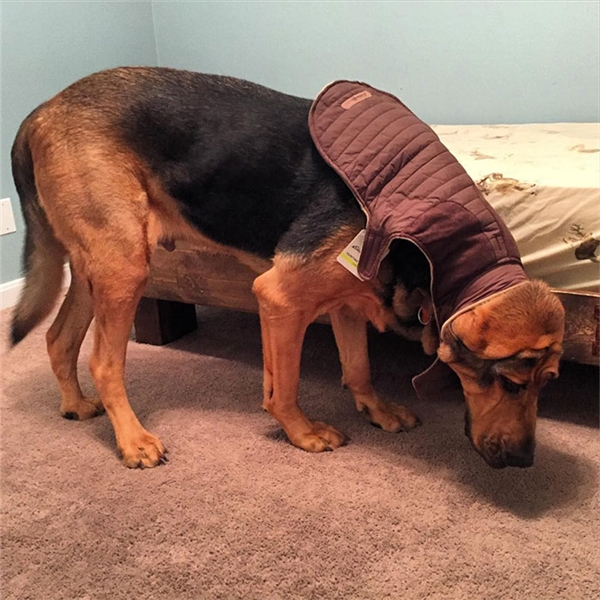 """Sản phẩm ghi rõ """"dành cho giống chó to"""" mà lại thế này, chẳng lẽ chú chó này thuộc hàng khổng lồ à?!"""