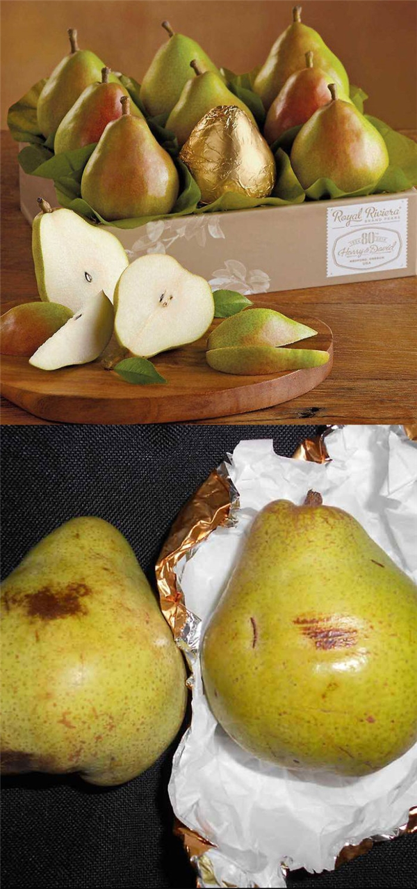 Hộp lê thơm ngon, mọng nước dùng làm quà Giáng sinh đã đến, trong đó có một trái được bọc giấy vàng, và đó là trái bị hư.