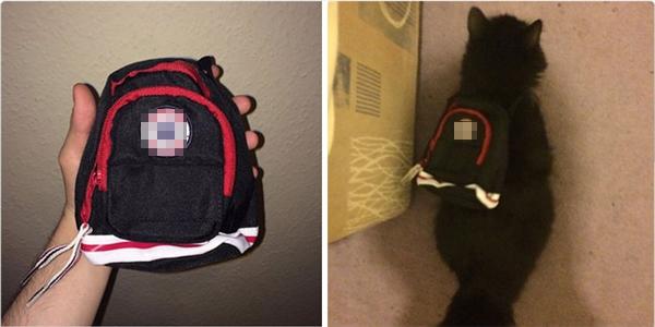 Một phụ nữ đặt mua ba-lô mới cho cháu trai mình và cuối cùng đã có một chiếc ba-lô xinh xắn cho... mèo cưng.
