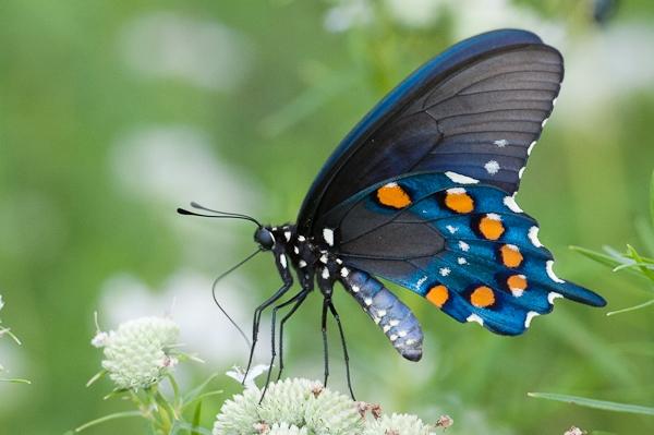 Những con côn trùng khiến bạn khóc thét với hình thù kì dị