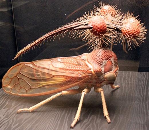 Điểm nổi bật của loài Treehopper Brazil là cái đầulạ thường đi kèm những quả cầu gai khó hiểu. (Ảnh: Internet)