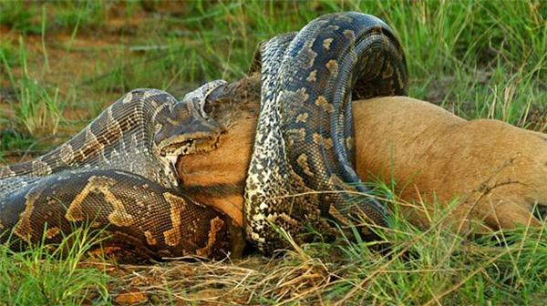 Cận cảnh những loài thủy quái hung tợn ở sông Amazon
